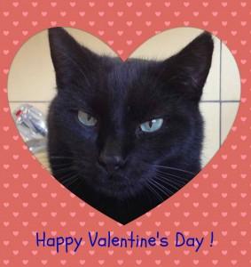 ValentineDayZ