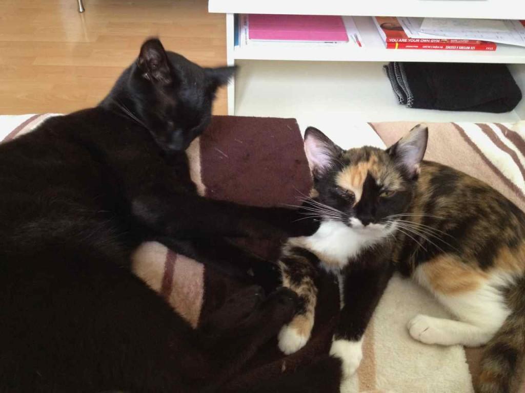 Pixie et Zorro canape