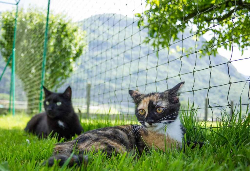 Pixie inquiete et Zorro