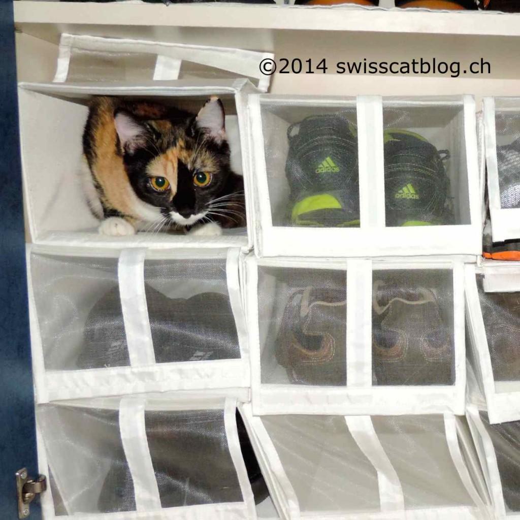 Pixie dans boite 2