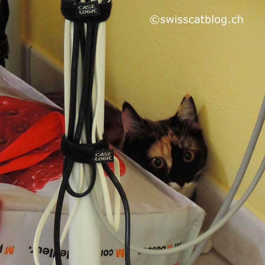 Pixie, afraid, is hidden behind a bag.