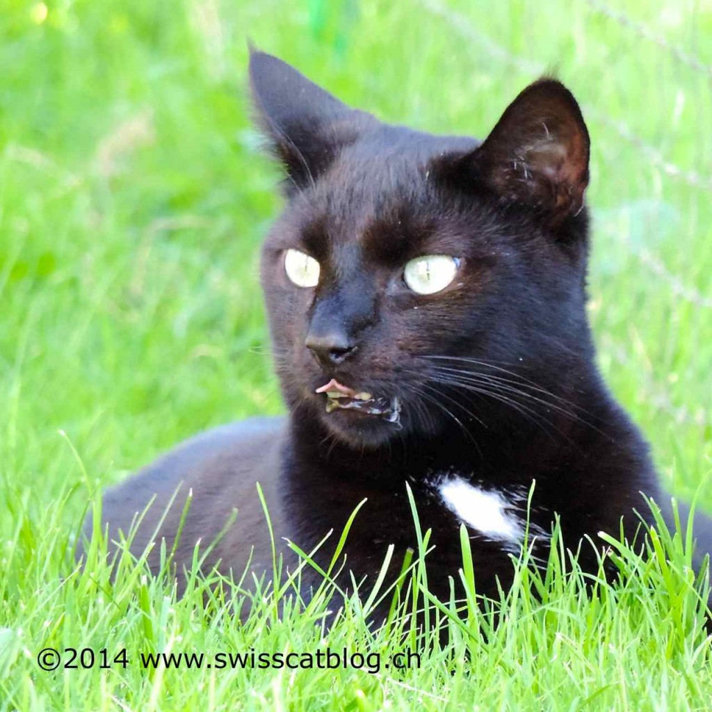 Zorro listening in the garden