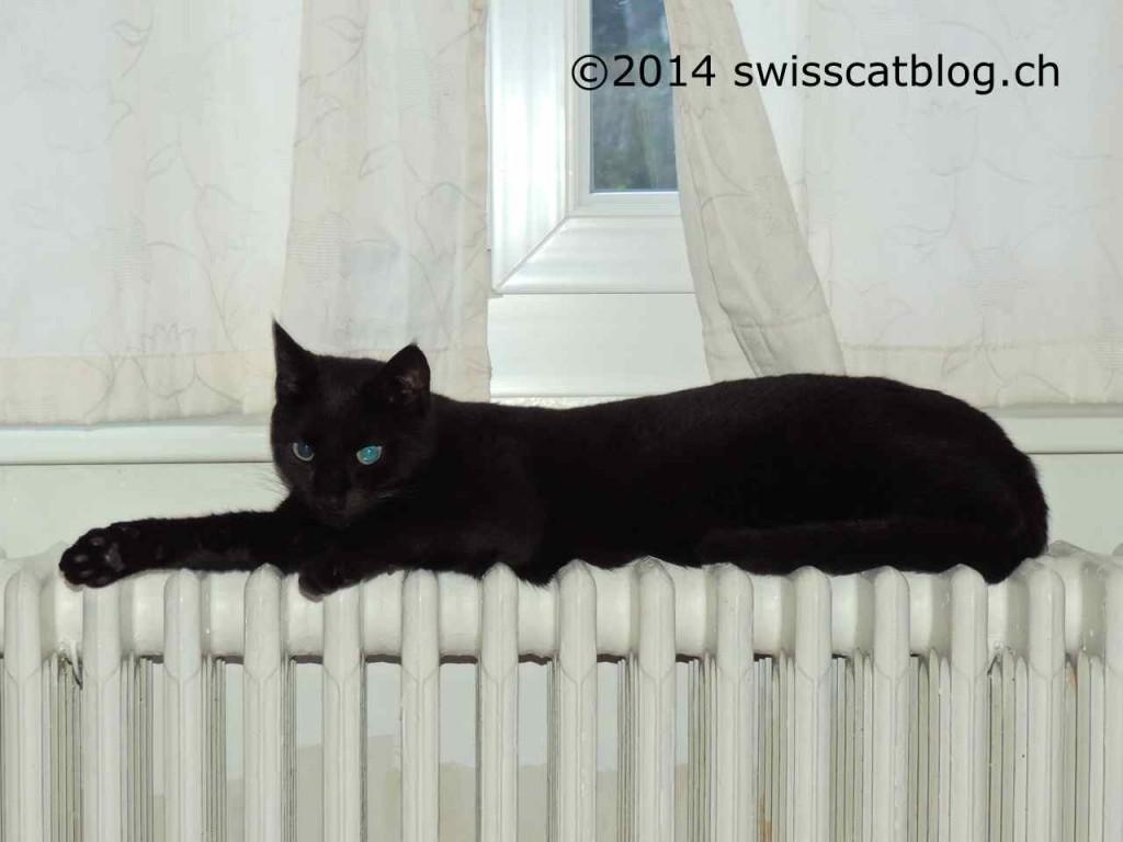 Zorro sur le radiateur