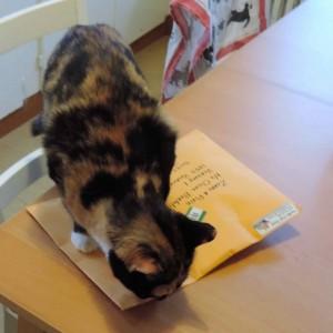 Pixie renifle le paquet.