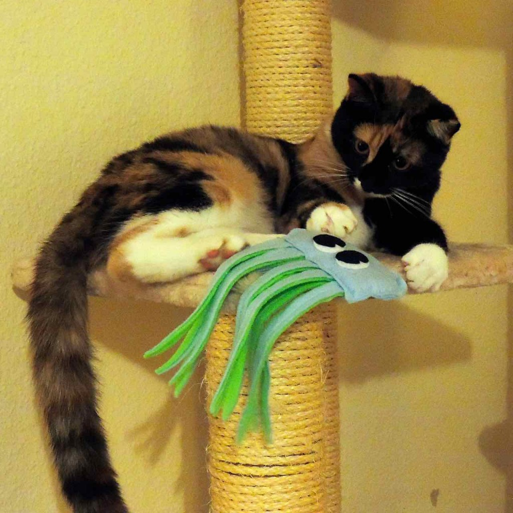 Pixie joue avec la méduse