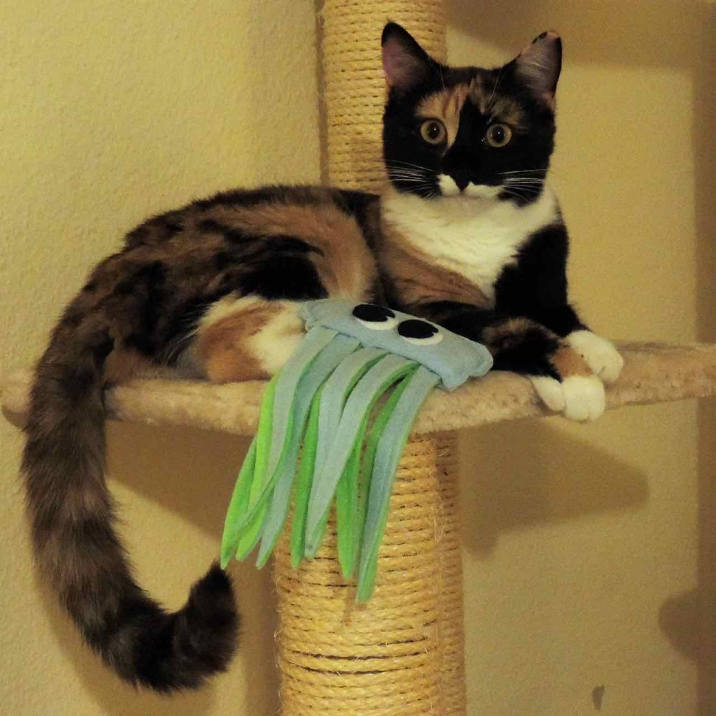 Pixie remercie Pacific Cat Toys