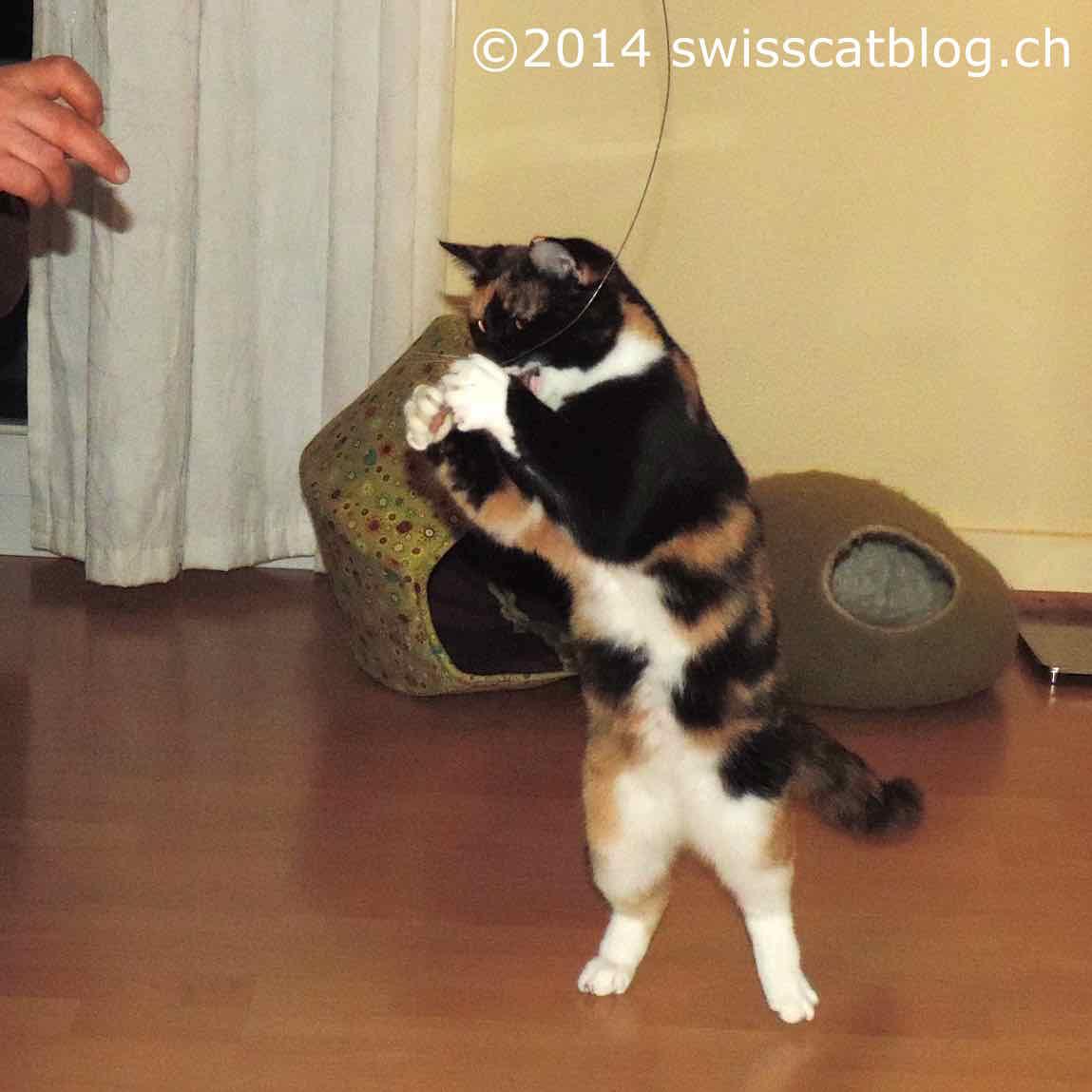 Pixie dancing