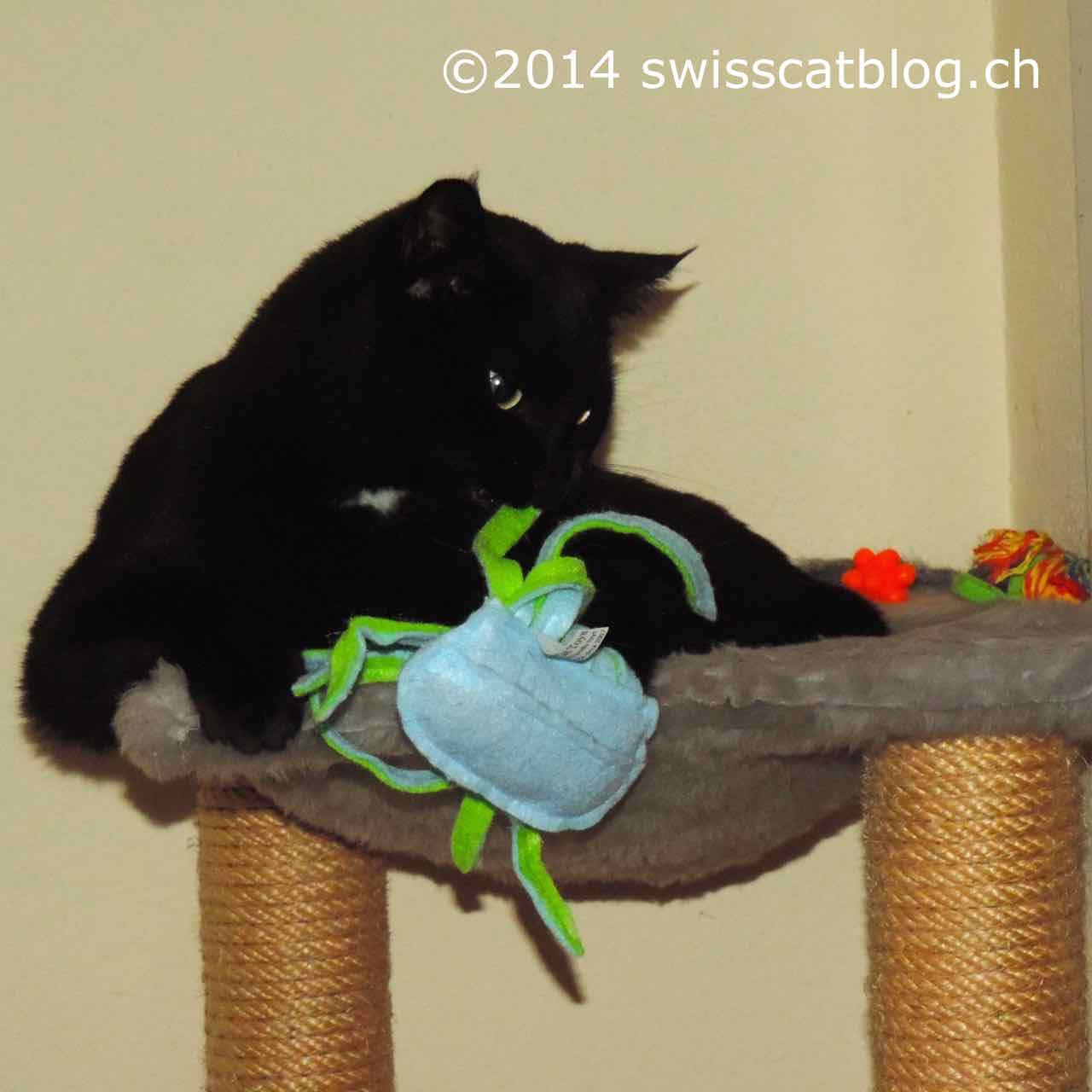 Zorro and jellyfish on the cat tree