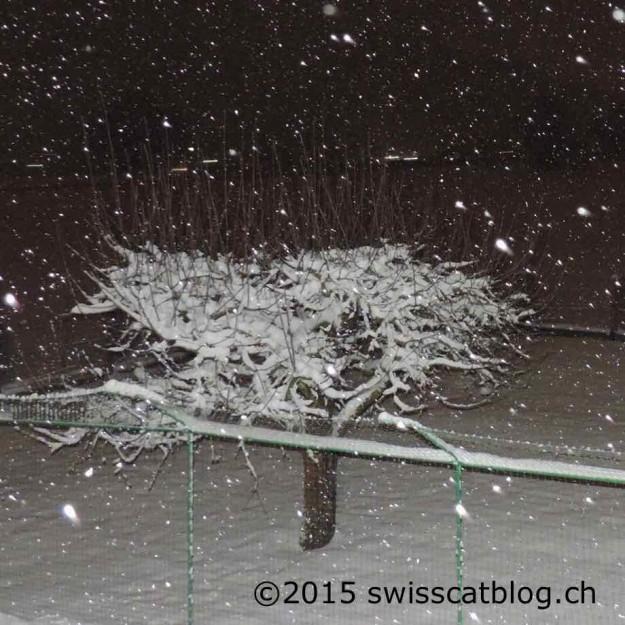 neige lundi soir