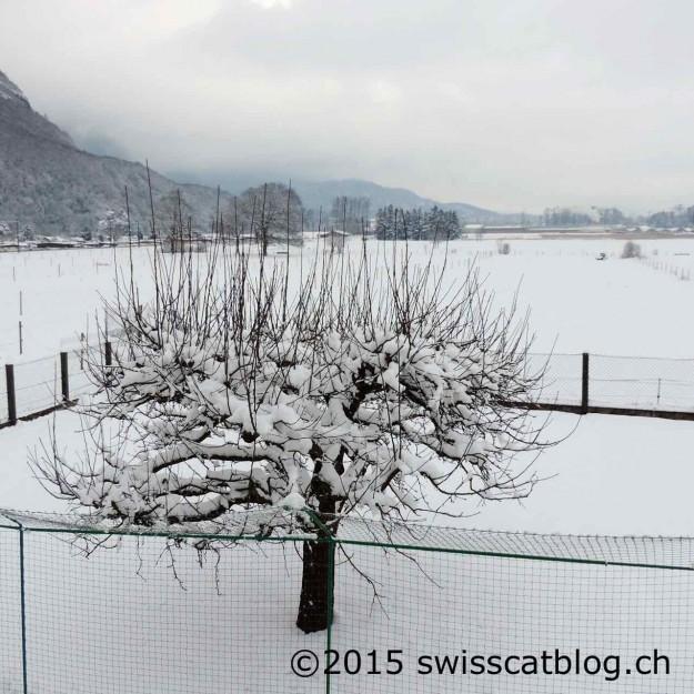 neige mardi matin