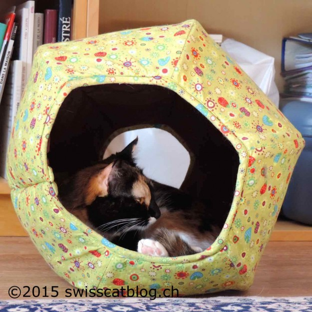 Pixie cozy in her cat cave