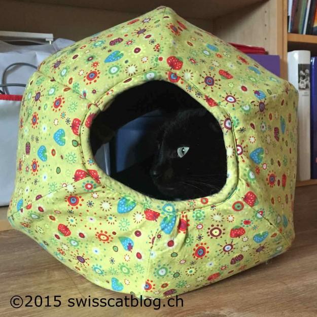 Zorro cozy in his cat cave