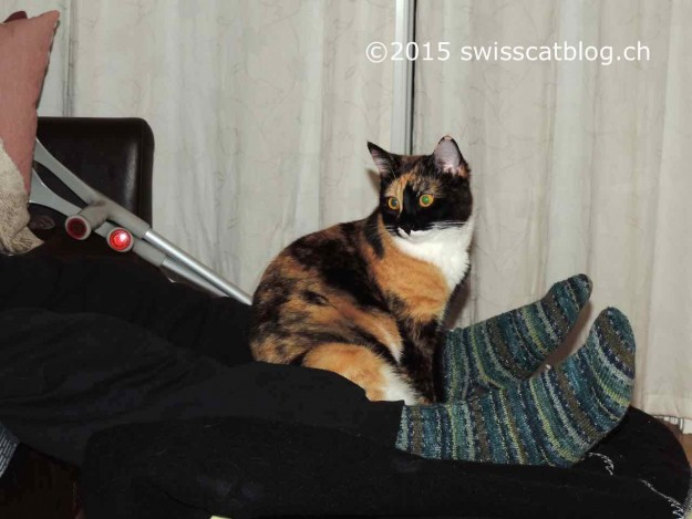 Pixie sur les pieds de Momo