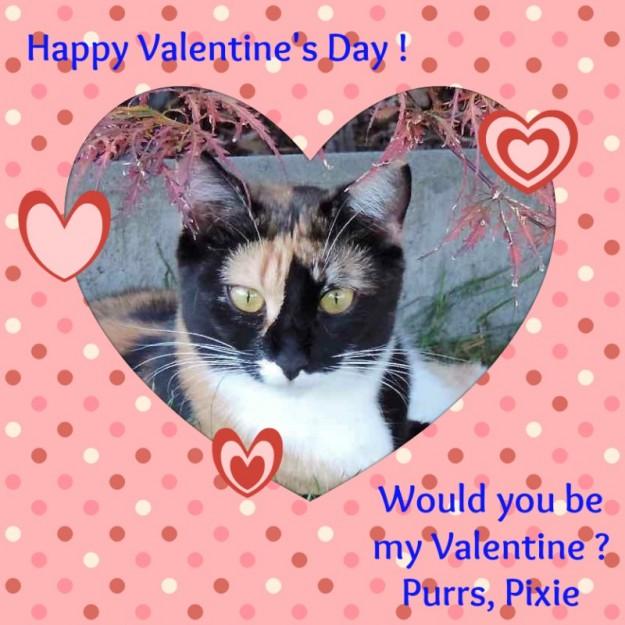 Valentine2016 Pixie