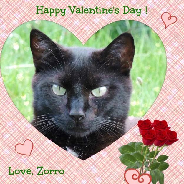 Valentine2016 Zorro