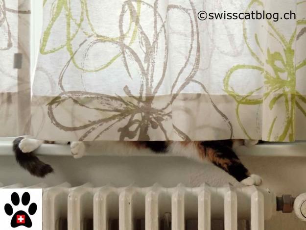 Pixie behind the curtain
