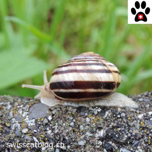 built for speed snail