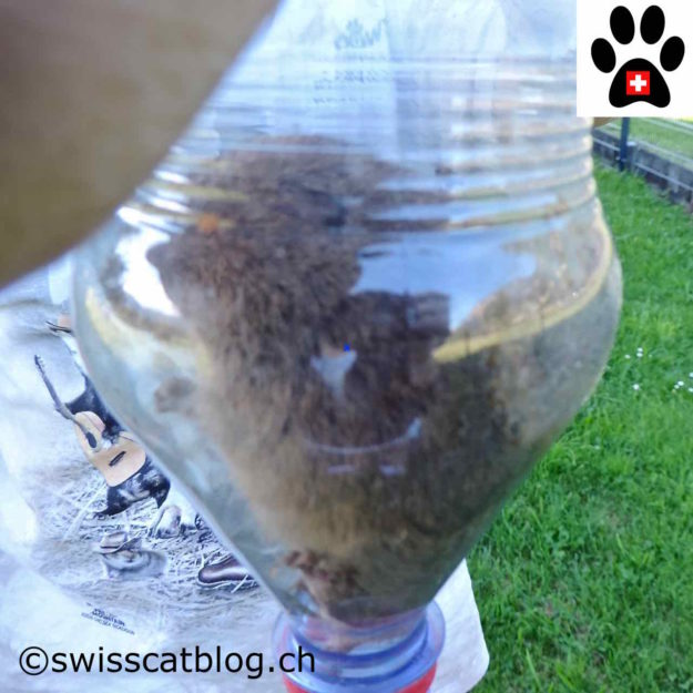 Vole in the bottle