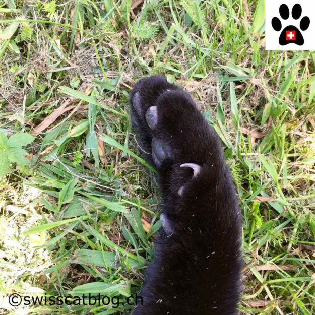 open paw