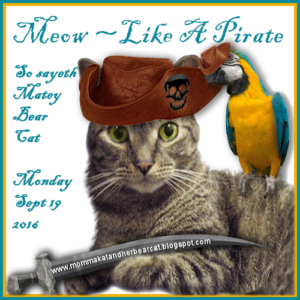 Meow Like A Pirate Day 2016