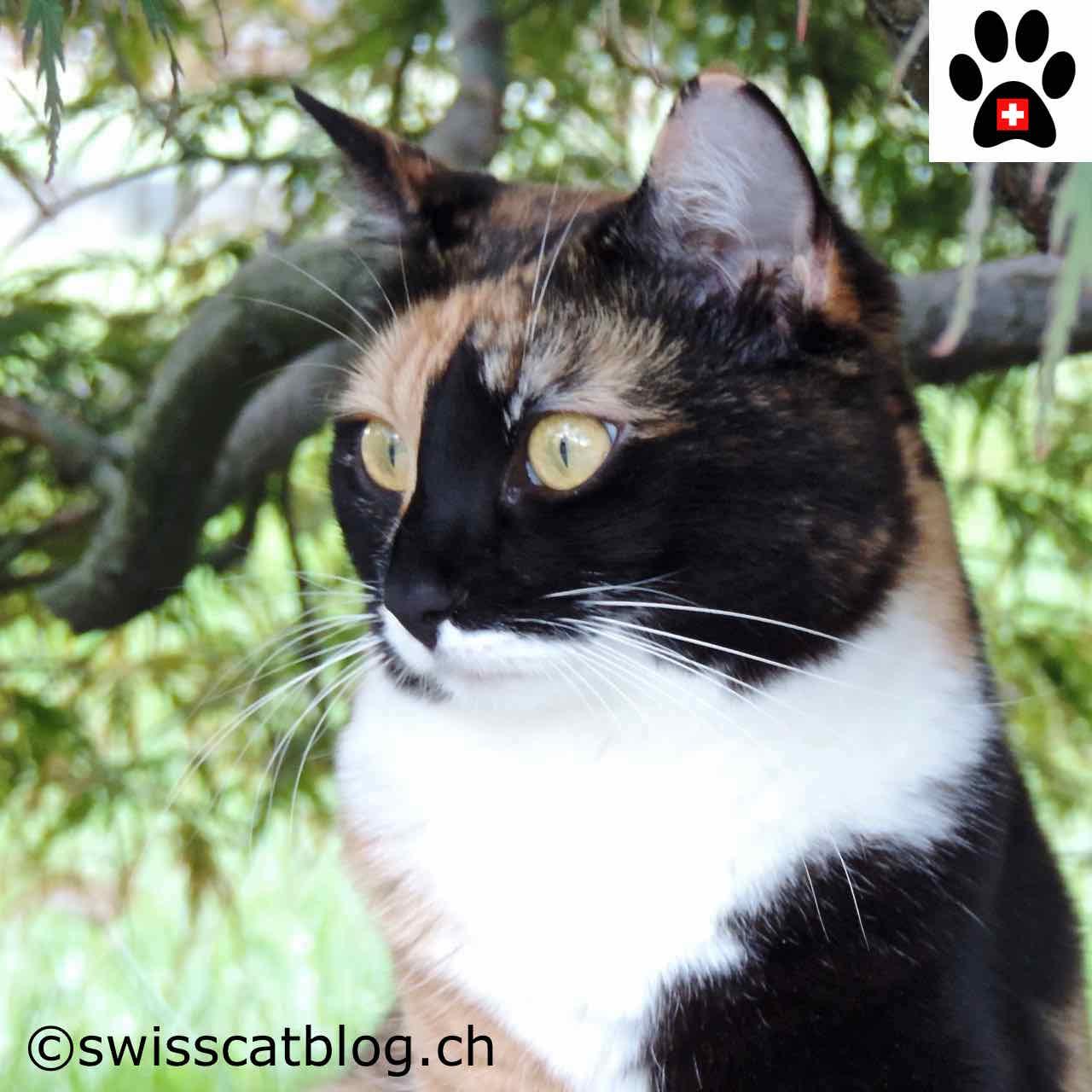 Nettoyer du pipi de chat comment nettoyer une tche ancienne du0027urine de chat et surtout - Enlever odeur pipi de chat ...