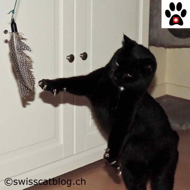 Zorro playing with the Kittycobra