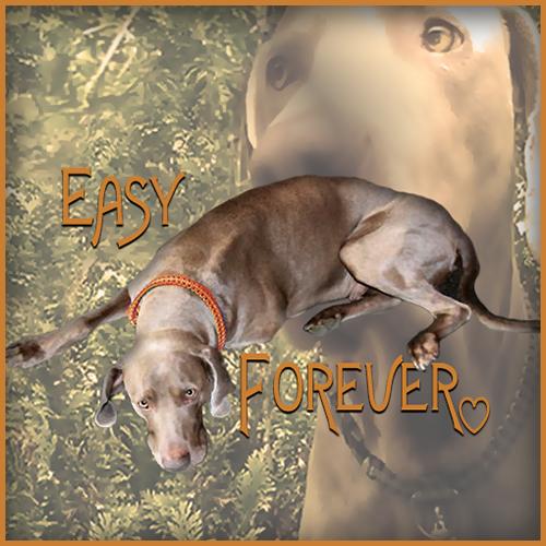 easyforever