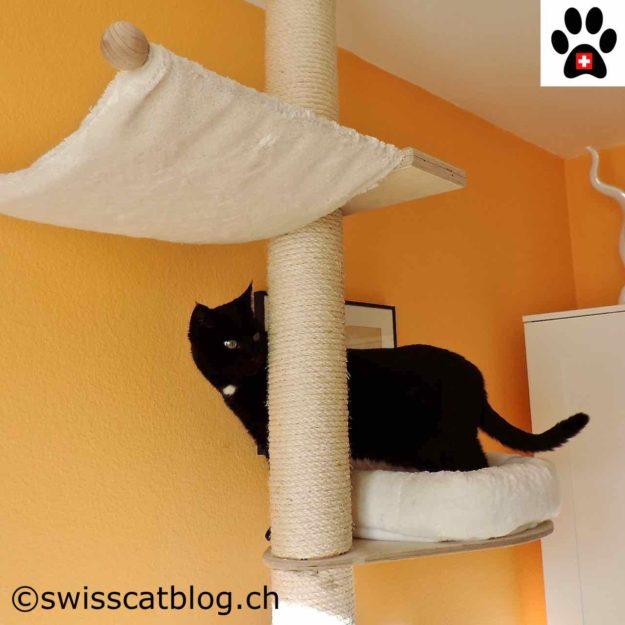 Zorro on the cat tree