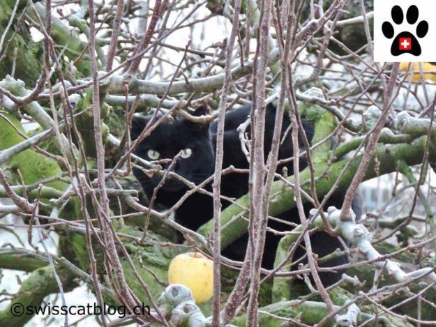 Hidden in the apple tree