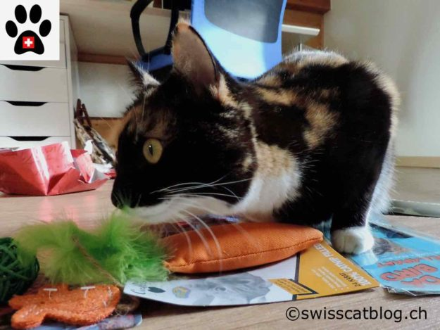 Pixie claims the carrot