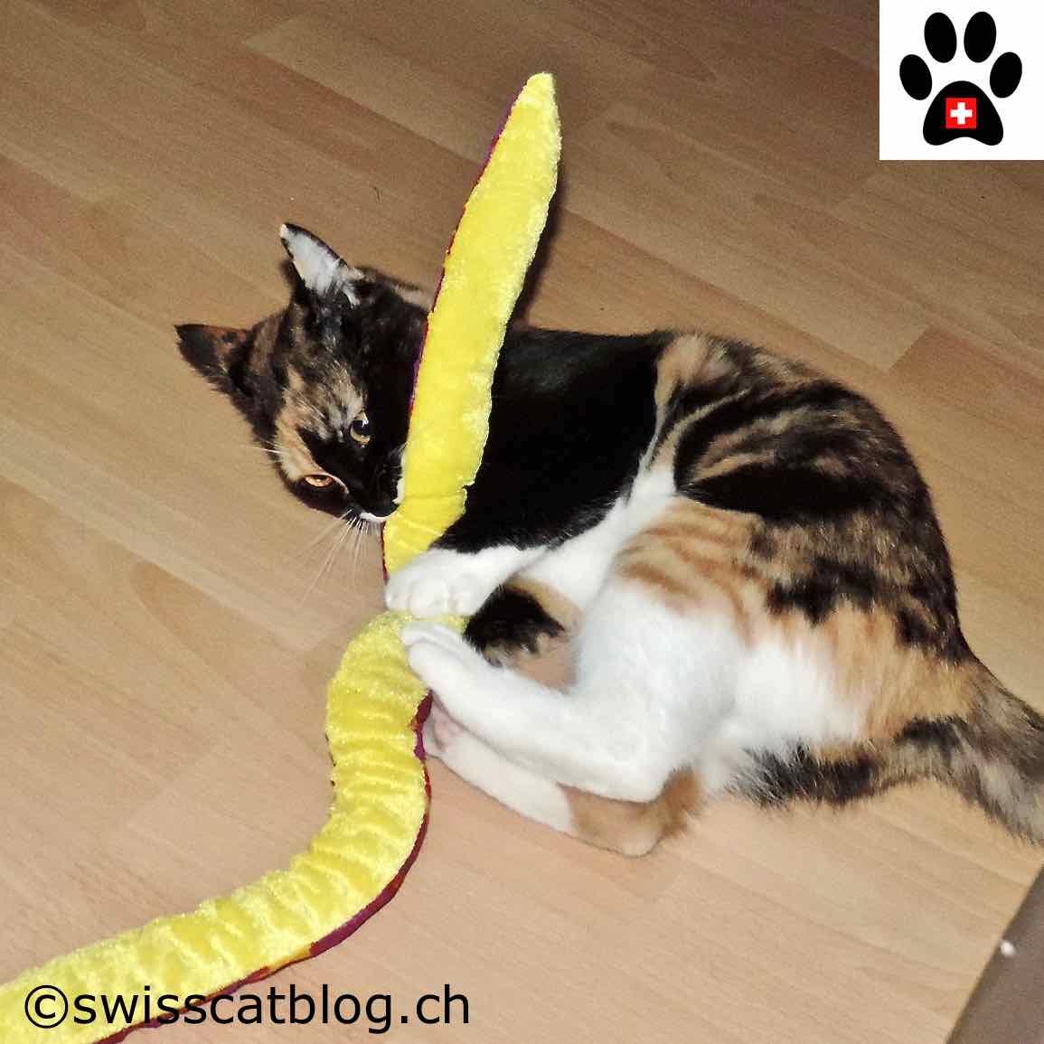 Le d veloppement du chaton 2 2 the swiss cats - Couper les griffes d un chaton de 2 mois ...