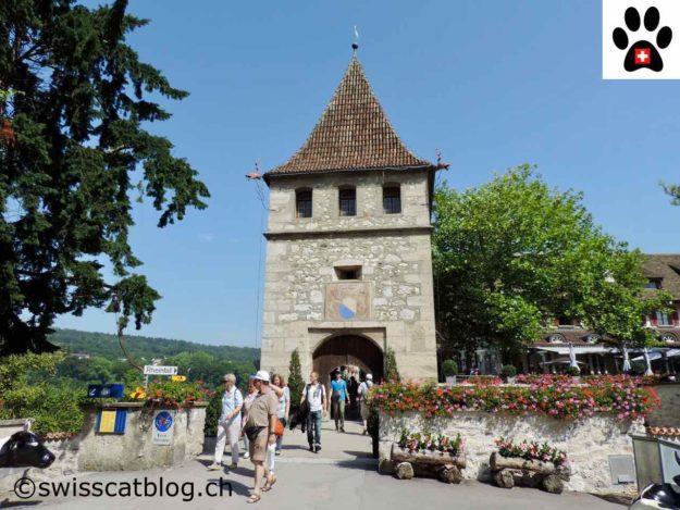 Chutes Rhin 02 Schloss Laufen