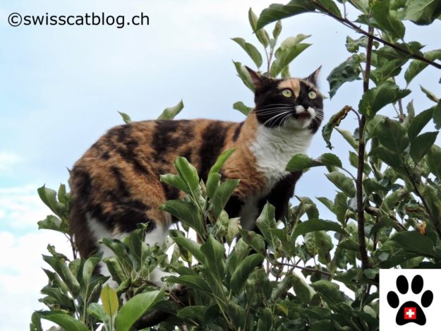 cats and vertical space, in the tree 3