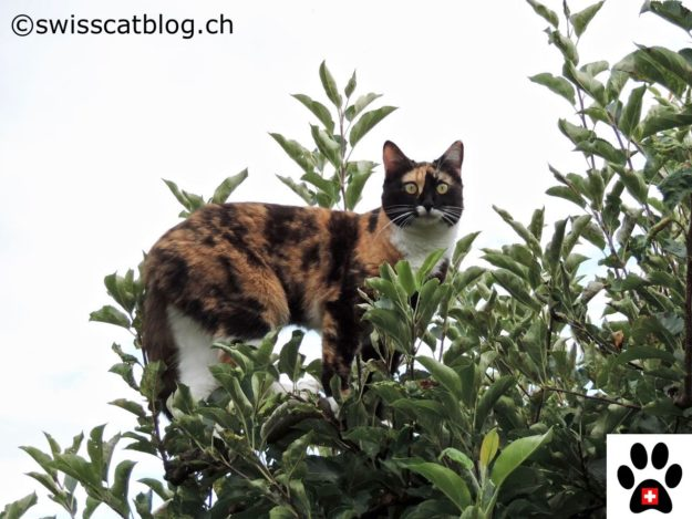 cats and vertical space, in the tree 1