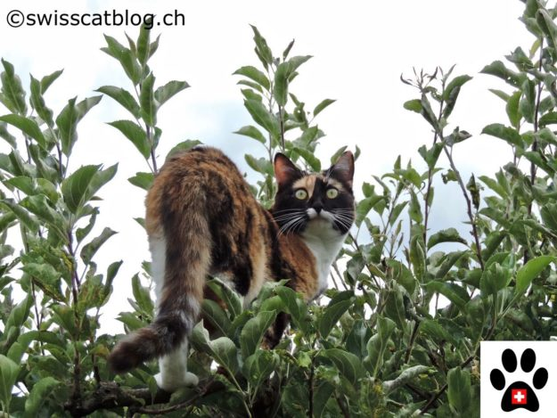 cats and vertical space, in the tree 4