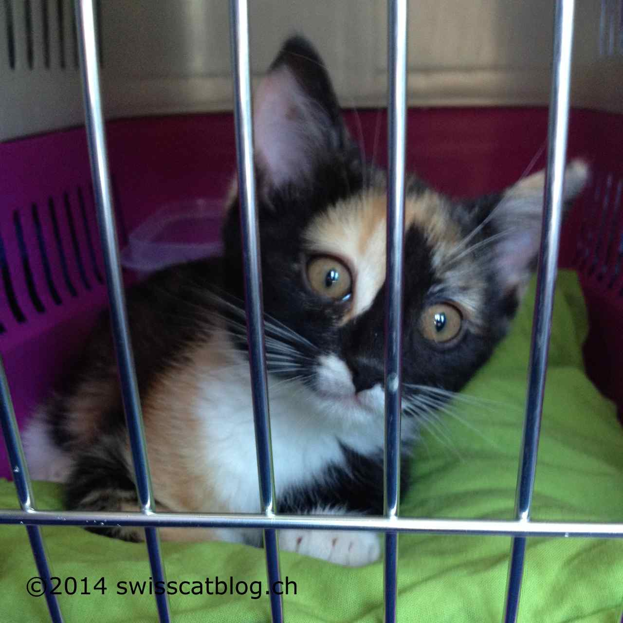 How to catch a cat being wary to go to the veterinarian