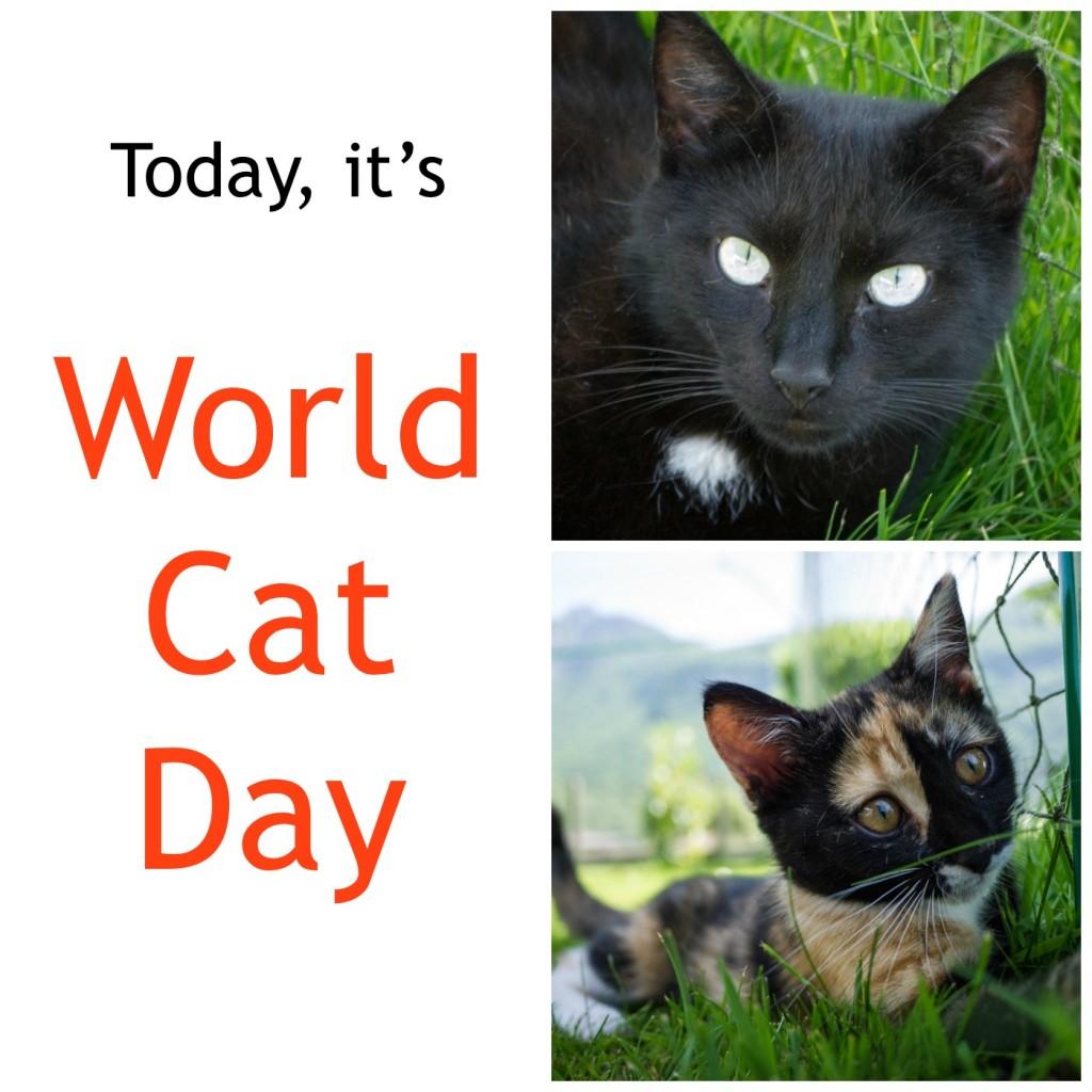 world cat day 2014