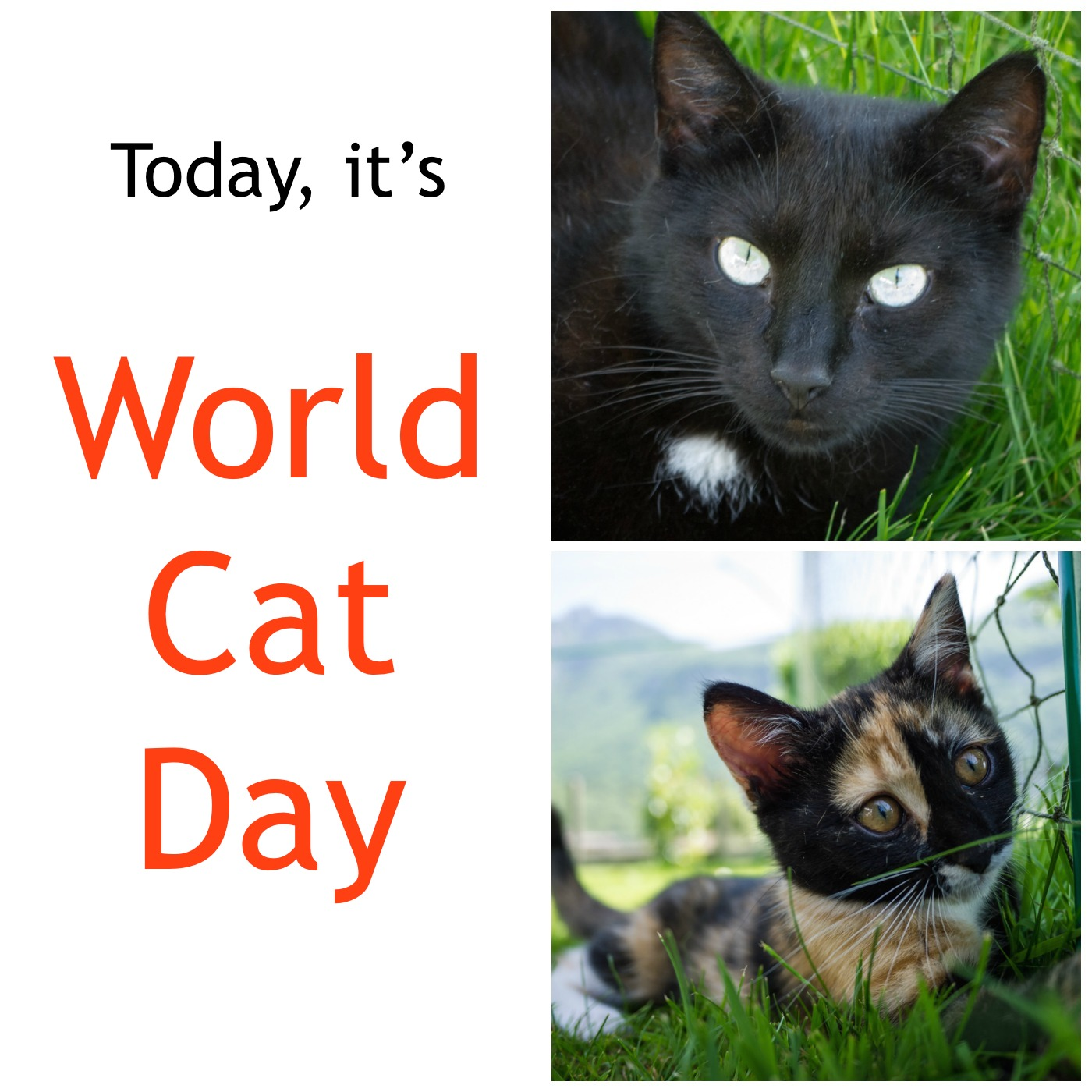 Today is Cat Day 47
