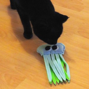 Zorro renifle la méduse