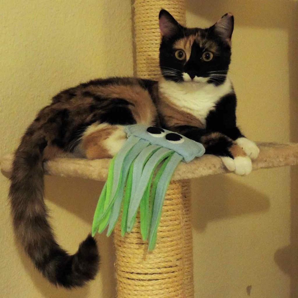 Pixie remercie Pacific Cat Toys