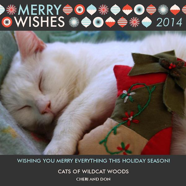 CatsOfWildcatsWoods14