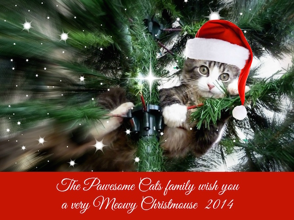 Pawesome Cats14