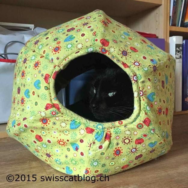 Zorro in his catball