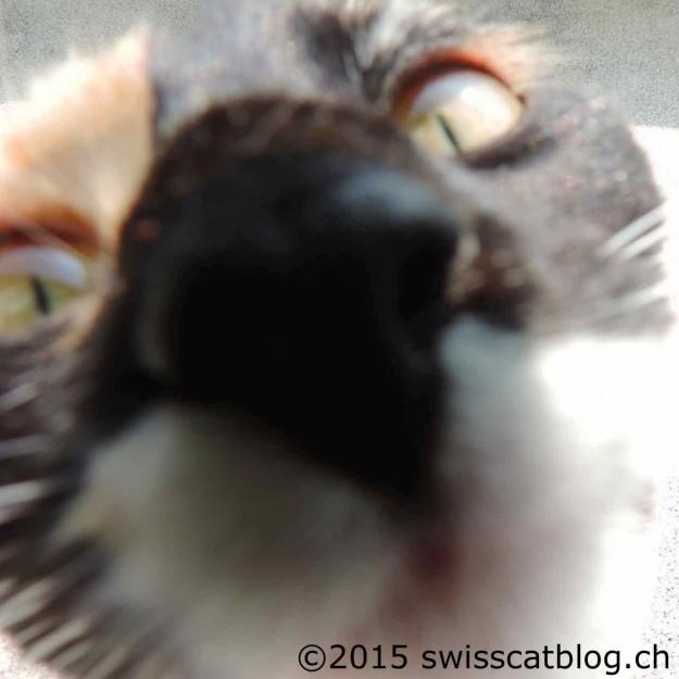 Pixie closeup