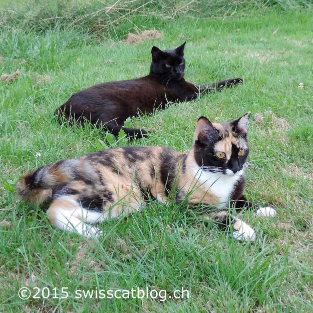 Pixie et Zorro 43