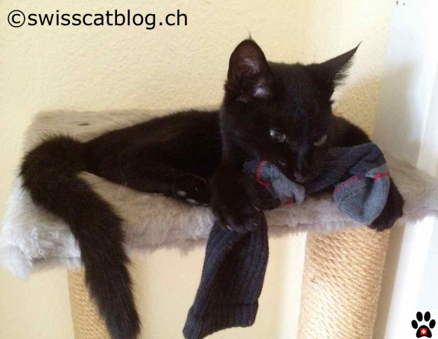 Zorro34 sock