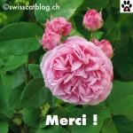 merci15
