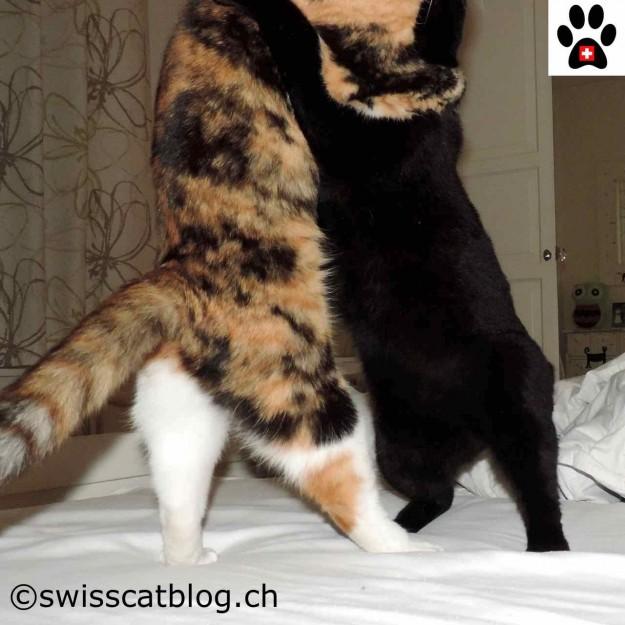 Pixie et Zorro dancing