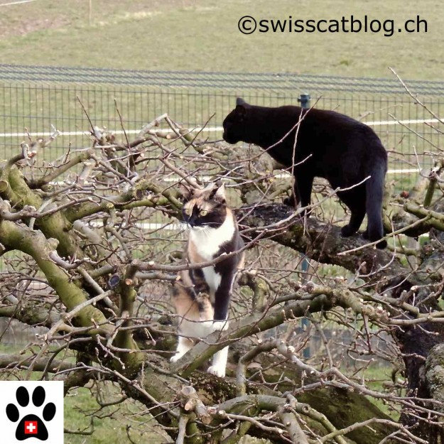Pixie and Zorro on the apple tree