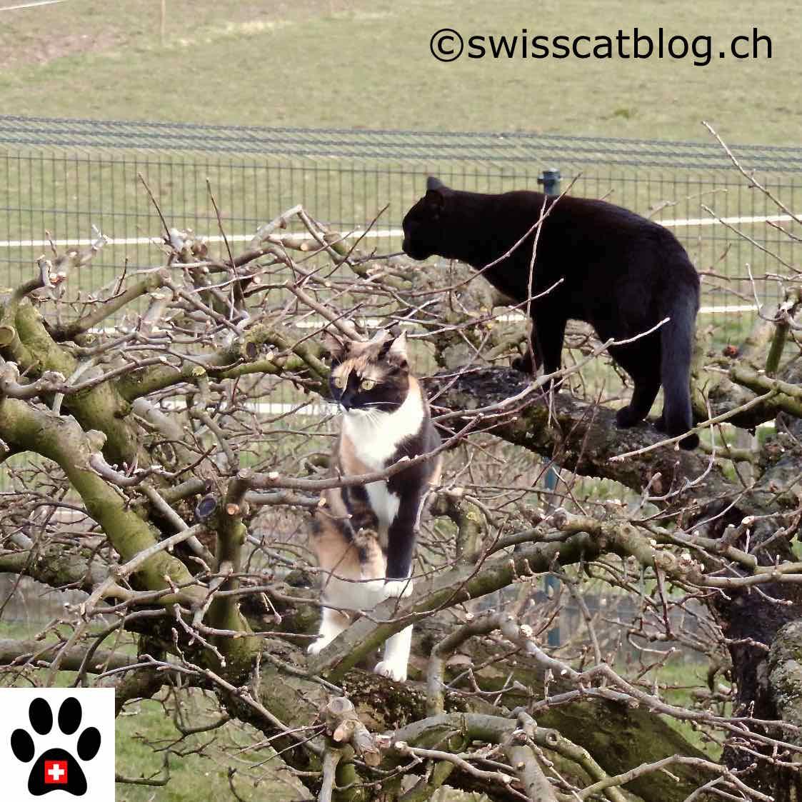 Recinzione Giardino Per Gatti.Come Il Mio Giardino Recintare Affinche I Miei Gatti Possano Andare